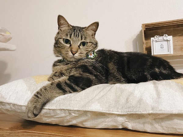 前足を伸ばしてベッドでぼんやりしてるキジトラ猫