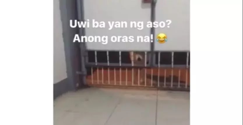 Pet owner scolds his dog for coming home late