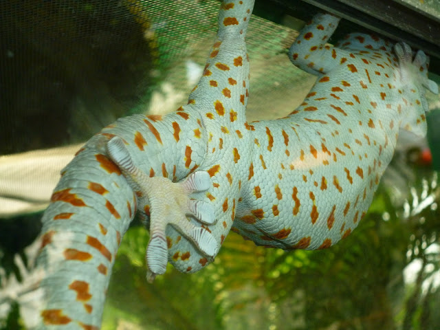gecko at marwell zoo