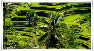Paket Wisata Bali Ubud Fullday Tour