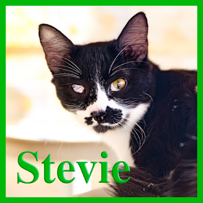 Stevie is at Friends of Larnaca Cats
