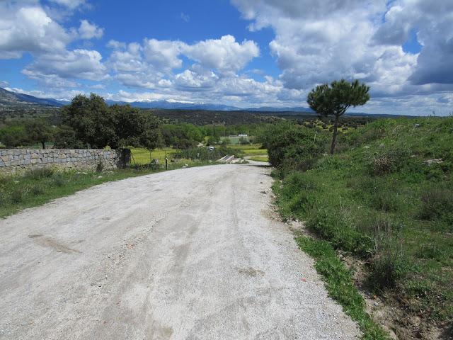 Senda la Puente, campo en primavera, sierra oeste de Madrid, caminos de flores, encinas, flores amarillas