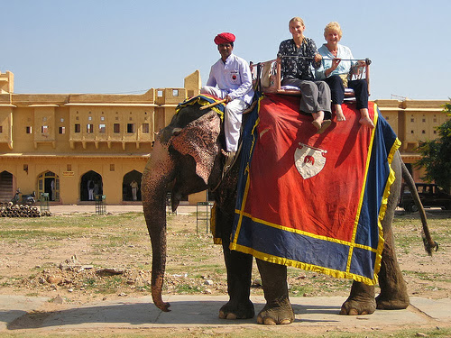 Elephant at Amber fort jaipur