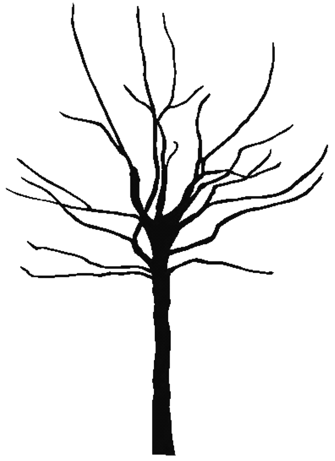 crafty nutter free image of a bare tree