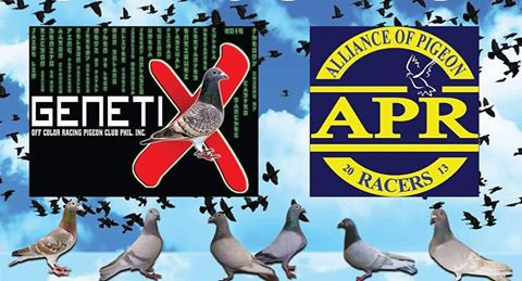 Pigeon Racing in Philippines- The Next Big Thing: October 2016