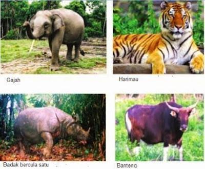 contoh fauna daerah Asiatis/Oriental