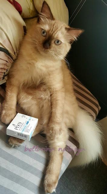 Paksa Kucing Makan Ubat