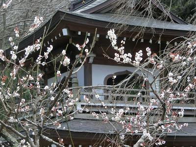円覚寺の梅