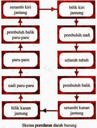 Susunan Peredaran Darah : susunan, peredaran, darah, Sistem, Peredaran, Darah, Hewan, Definisi, Pengertian, Secara, Adalah