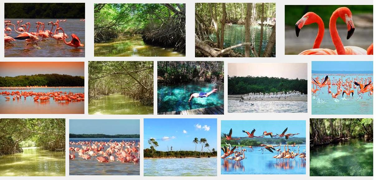 Resultado de imagen para celestun yucatan collage