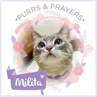 "A badge that has a photo of Milita and says ""Purrs and Prayers Milita"""