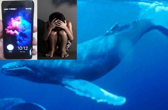 what-is-blue-whale-online-game-take-another-life-in-west-bengal
