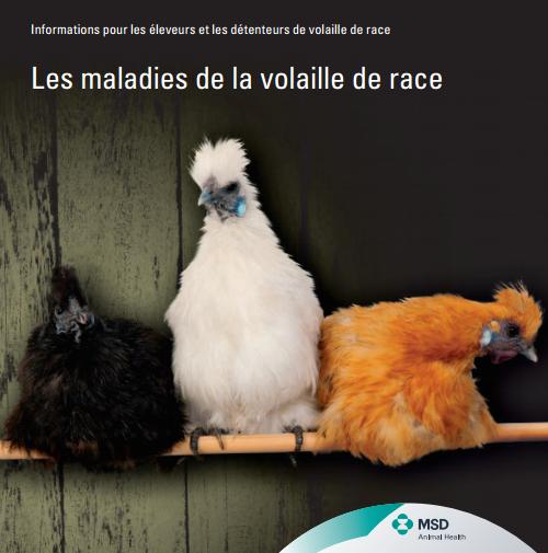 Les maladies de la volaille de race - WWW.VETBOOKSTORE.COM