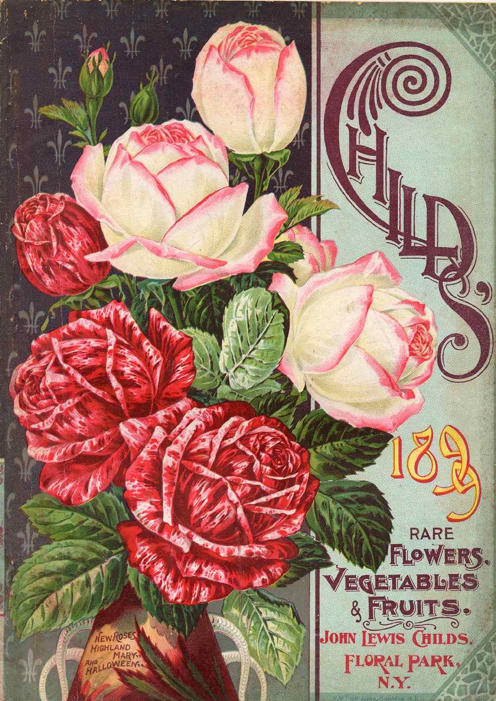 100 flowers flower lews life lotus our favorite rose