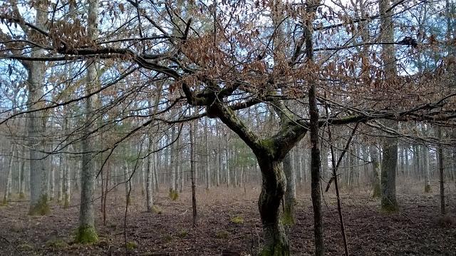 Chambord randonnée en forêt