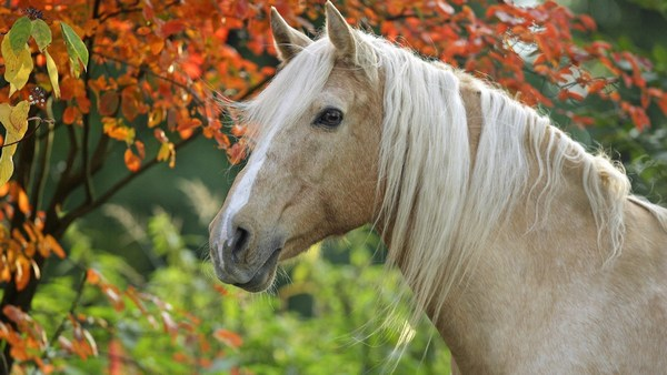 Beautiful Horse Pictures Free Download