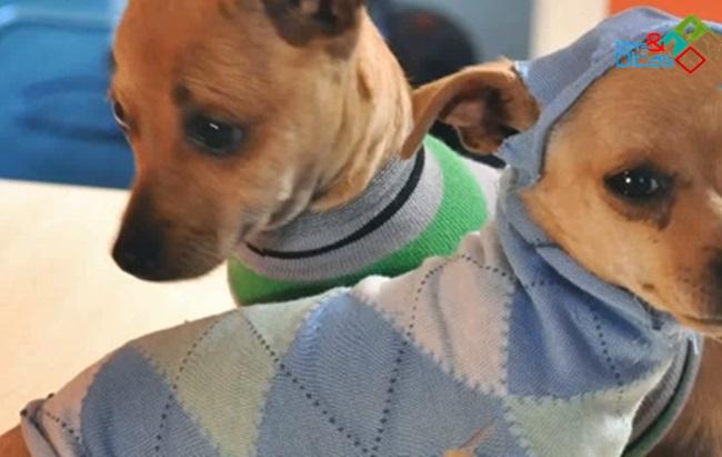 Como fazer roupa para cão com meia