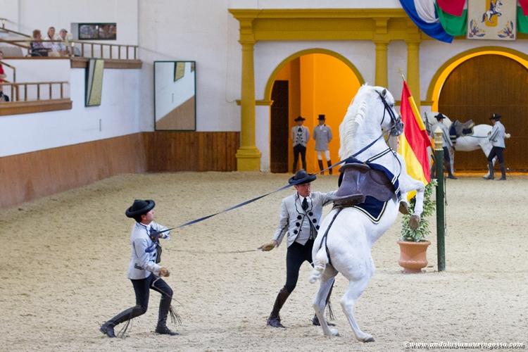 Andalusian kuninkaallinen hevoskoulu Jerez_Andalusian Royal Equestrian School Jerez_8