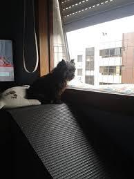 rampas e escadas para cães