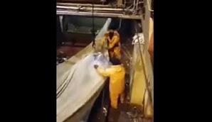 Nelayan Dibuat Tercengang Usai Tangkap Ikan Raksasa