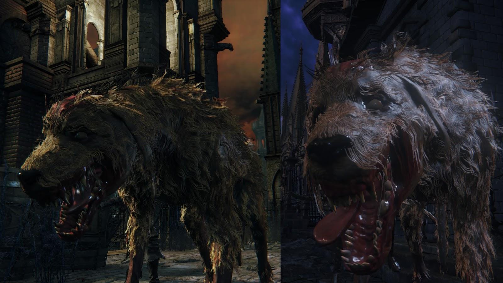Rabid Dog Bloodborne Wiki