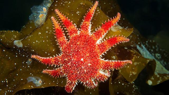 Descubren un 'desierto submarino' en el Pacífico que podría provocar un desastre medioambiental