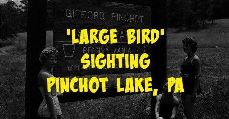 'Large Bird' Sighting - Pinchot Lake, PA