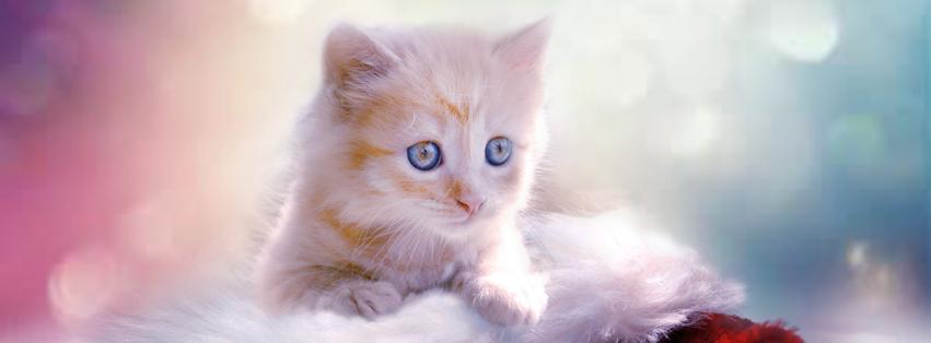 Cat Cover Photo