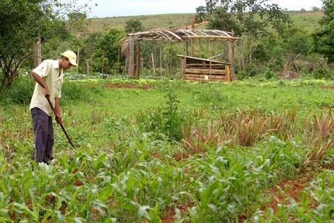 Resultado de imagem para fotos de homens trabalhando na agricultura