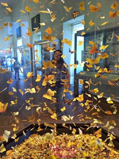 Melhores museus do Rio