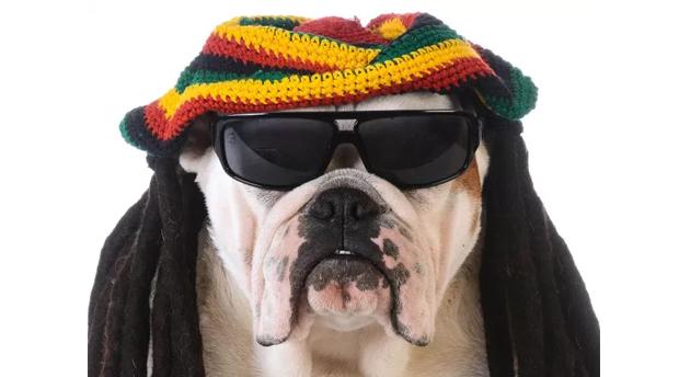 a tu perro le gusta el reggae