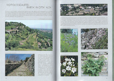 The book 30 luoghi verdi del cuore put out by the Gruppo Flora Alpina Bergamasca (FAB) - example page.