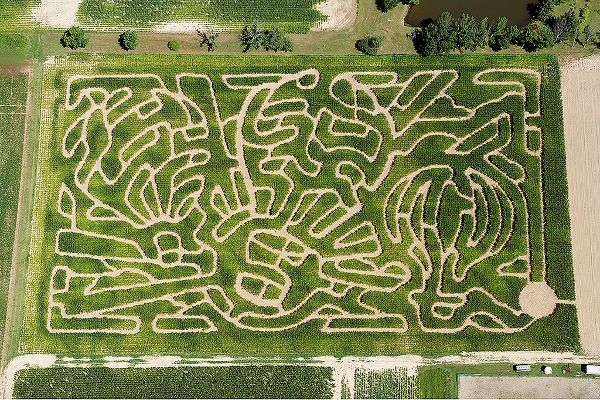 Beriswill Farms Family Corn Maze coupon (up to 8 people) $25! @usfg #thisiscle