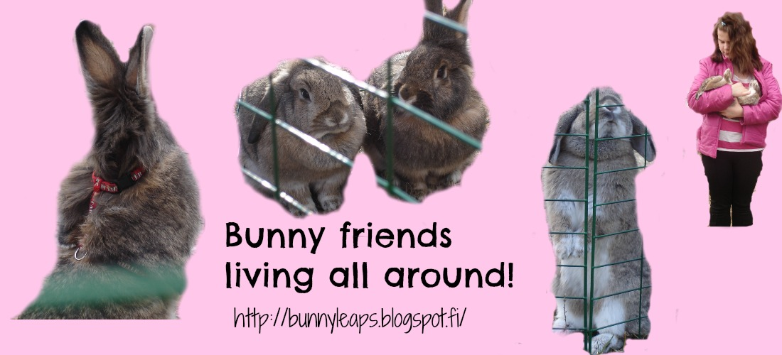 Bunny Friends Living All Around