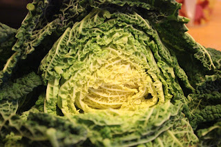 organic Savoy cabbage poultice