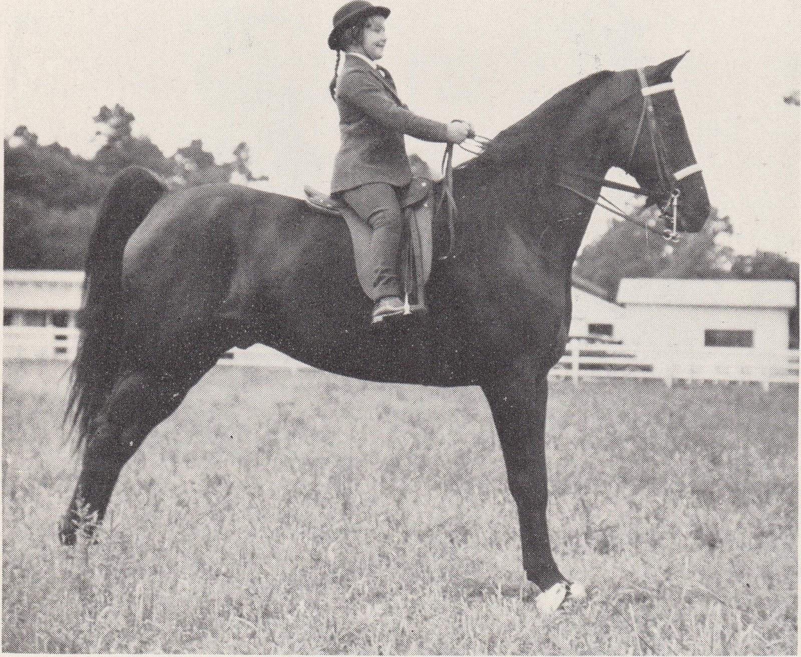 Bobby Jones Ford >> The American Saddlebred: 12/27/2015 Vintage Saddle ...