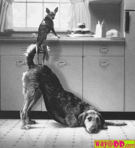 animals helping each other - photo #29