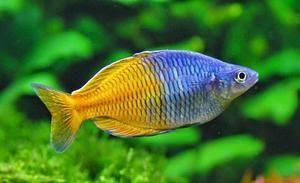 https://www.watnyus.com/2018/12/bingung-mencari-ikan-aquascape-inilah.html