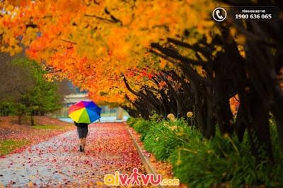 mùa thu lá vàng tại Úc