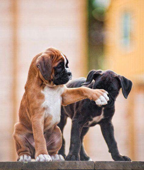 Perritos cachorros