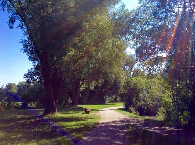 ミュンヘンの公園で撮影した写真