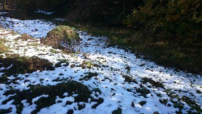 谷津の残雪