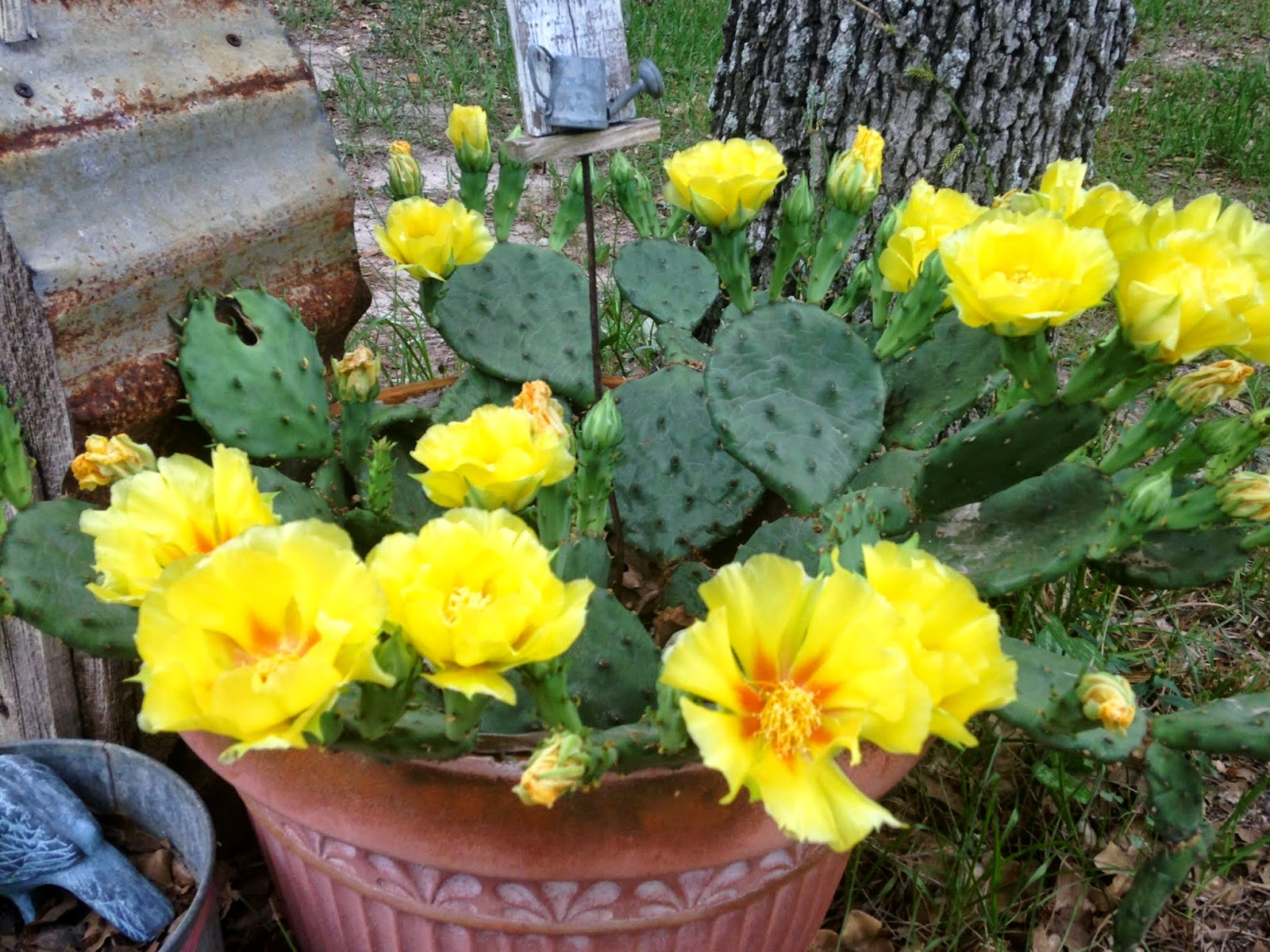 Every little birdie the yellow rose of texas beautiful to look at mightylinksfo