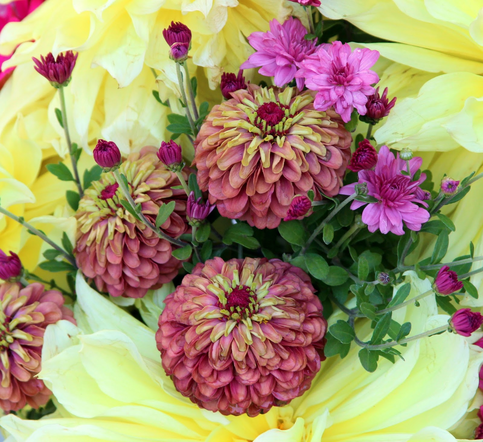 ZINNIAS, MUMS AND DAHLIAS -- OUTSTANDING COLOR IN FALL ...