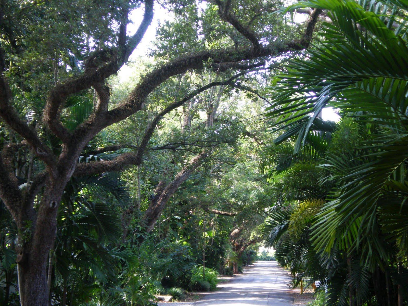 Los Viajes De Montenegro Coconut Grove En Florida