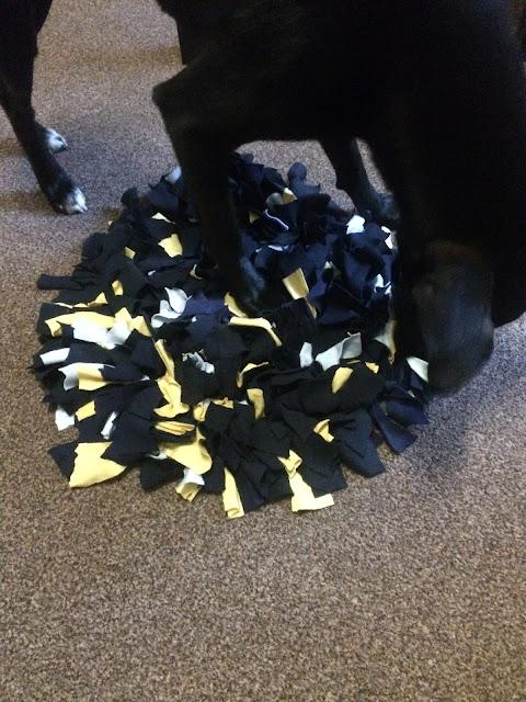 7 Zabaw węchowych dla psów