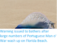 https://sciencythoughts.blogspot.com/2018/02/warning-issued-to-bathers-after-large.html