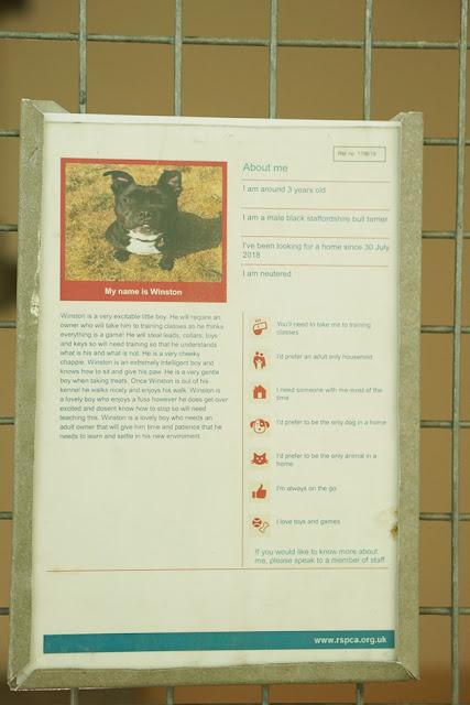 イギリス シェルター RSPCA 犬 紹介カード