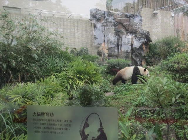 Taipei Zoo - Panda Außengehege