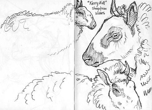 An Artist's Life For Me!: Drawing Animals in Graves Park
